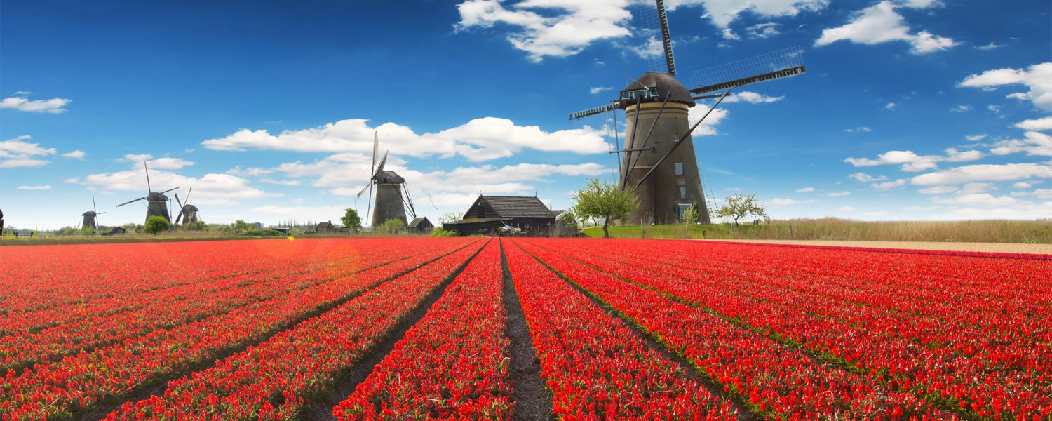 Top 5 Events Happening At The 2019 Amsterdam Tulip Festival